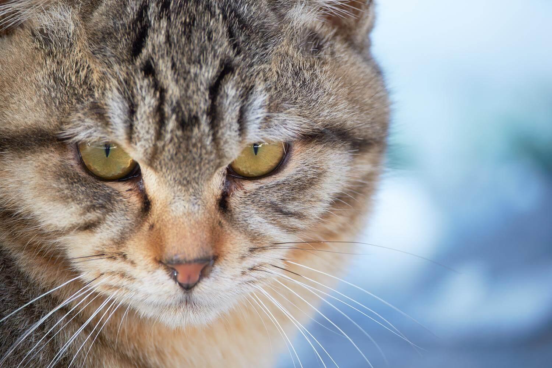 凛とした猫