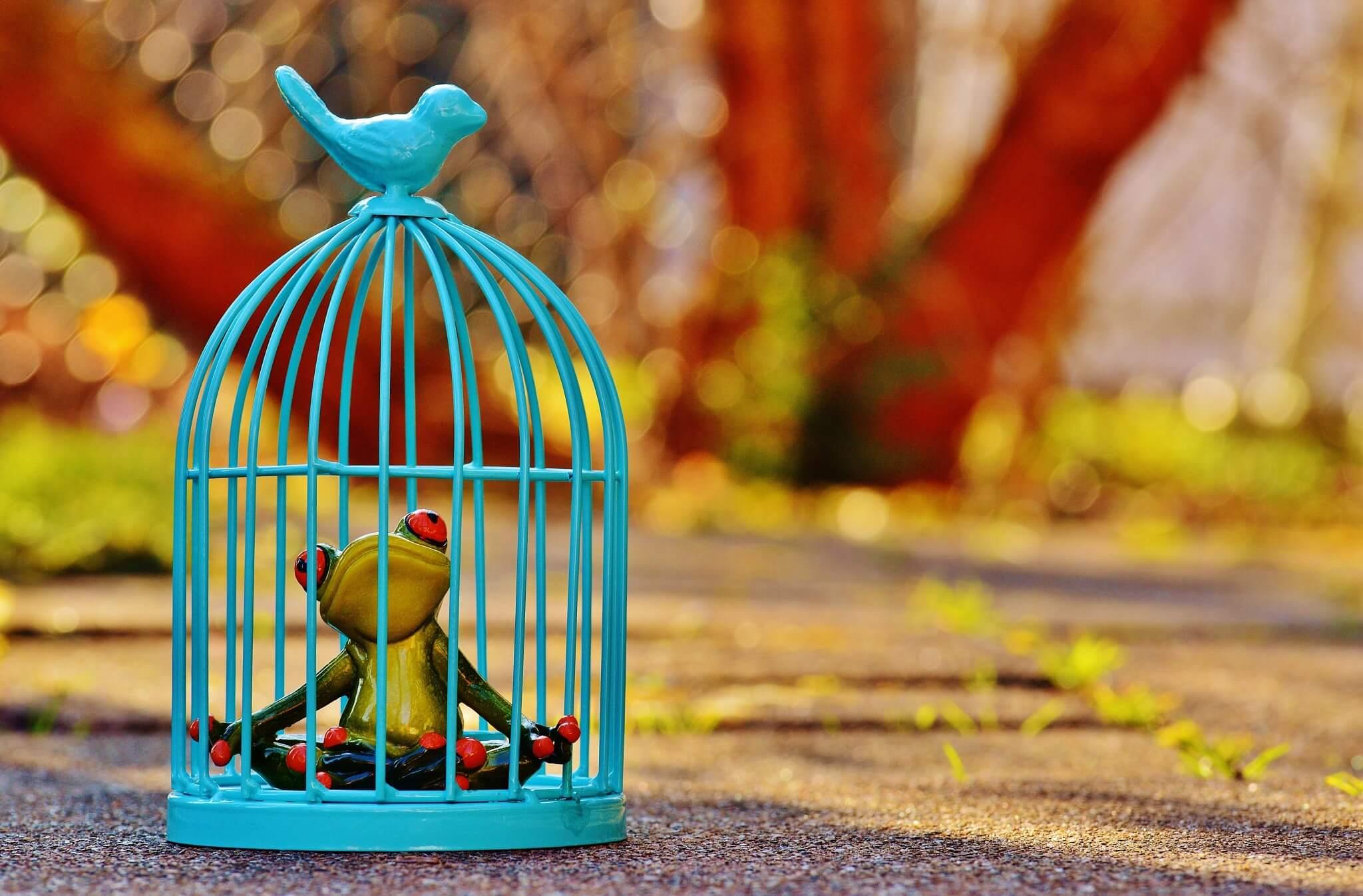 檻のなかの蛙