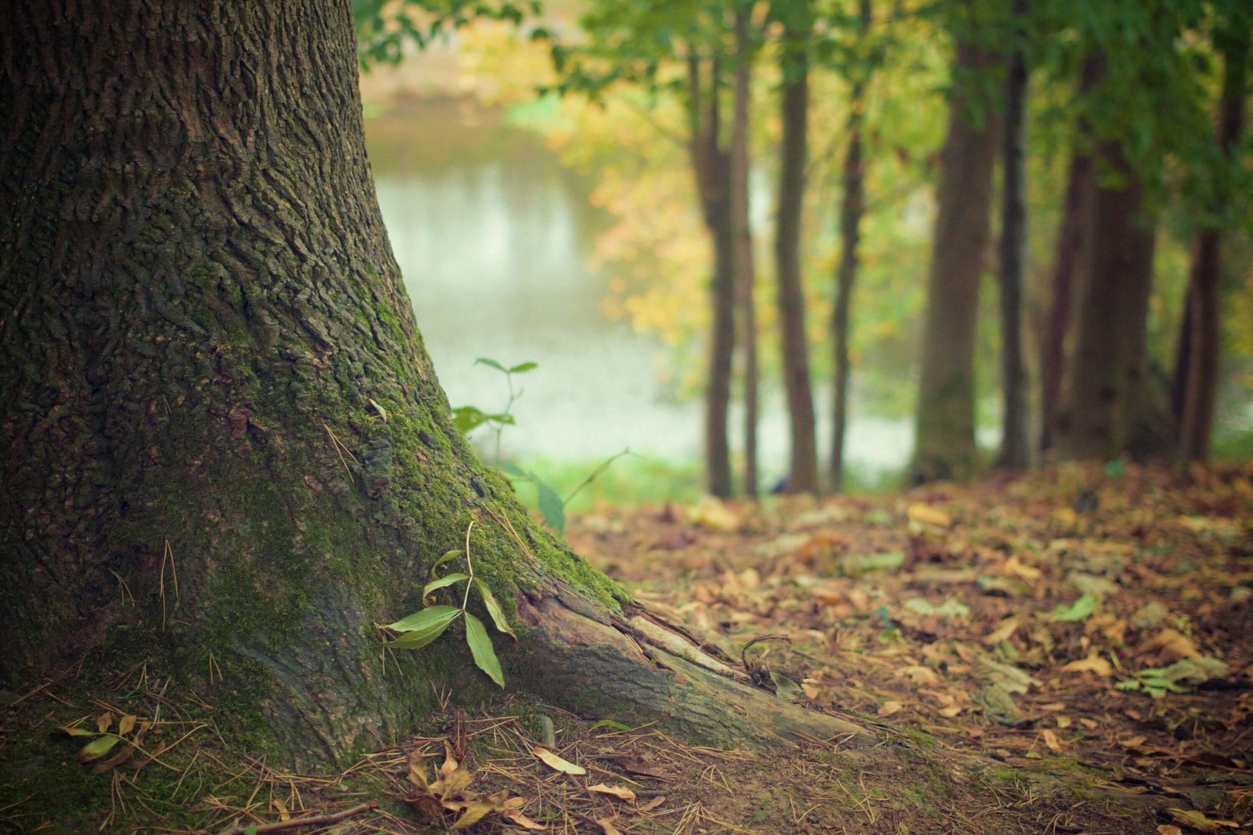 樹の幹と若葉