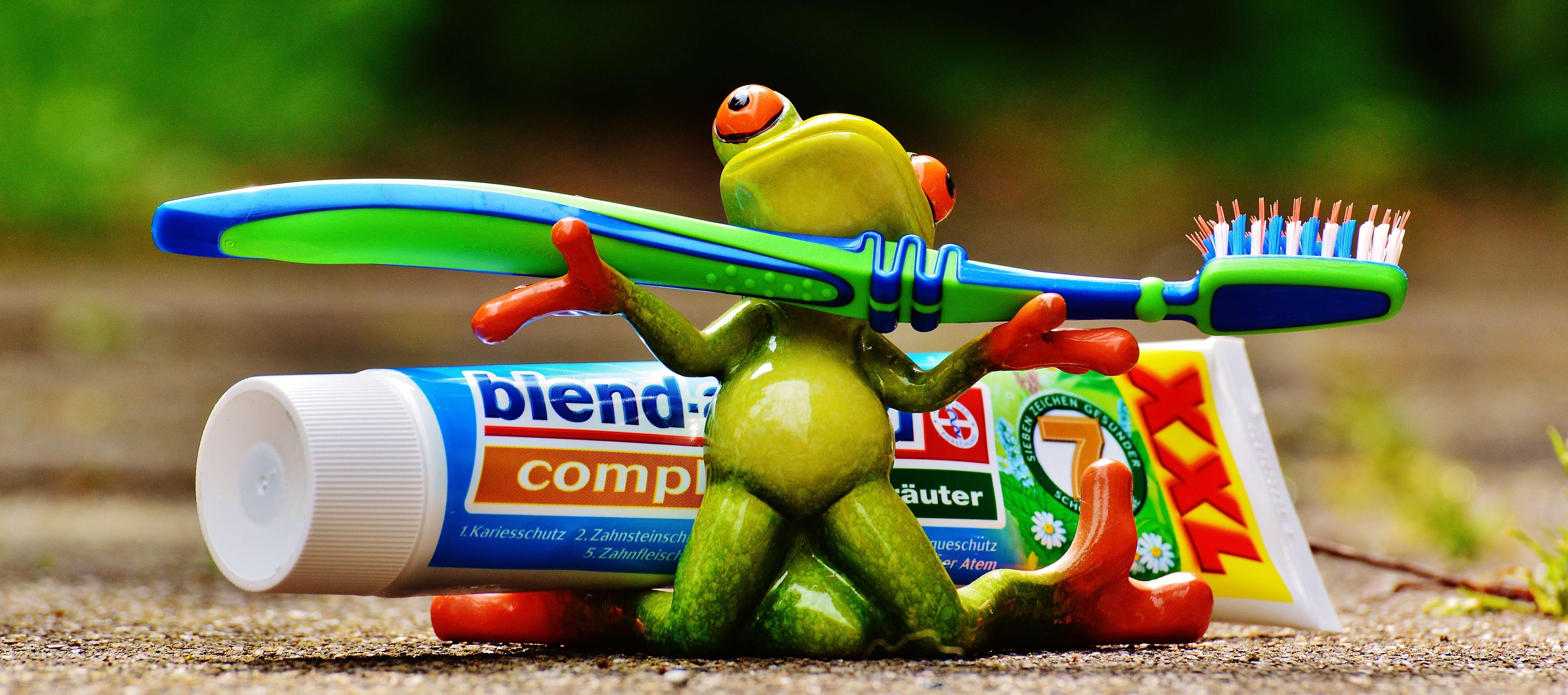 歯磨きに挑戦する蛙