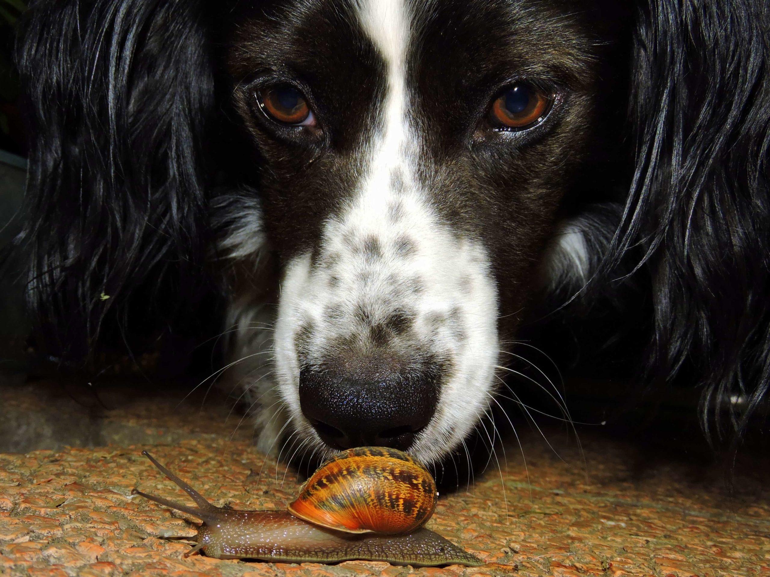 犬とカタツムリ