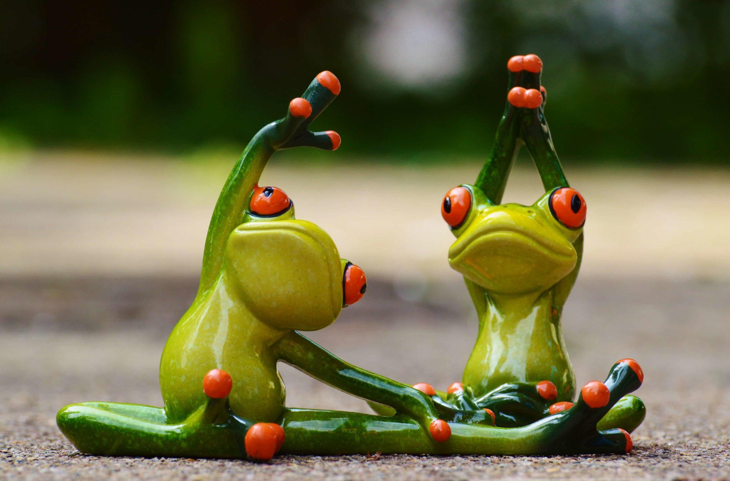 ストレッチをする2匹の蛙