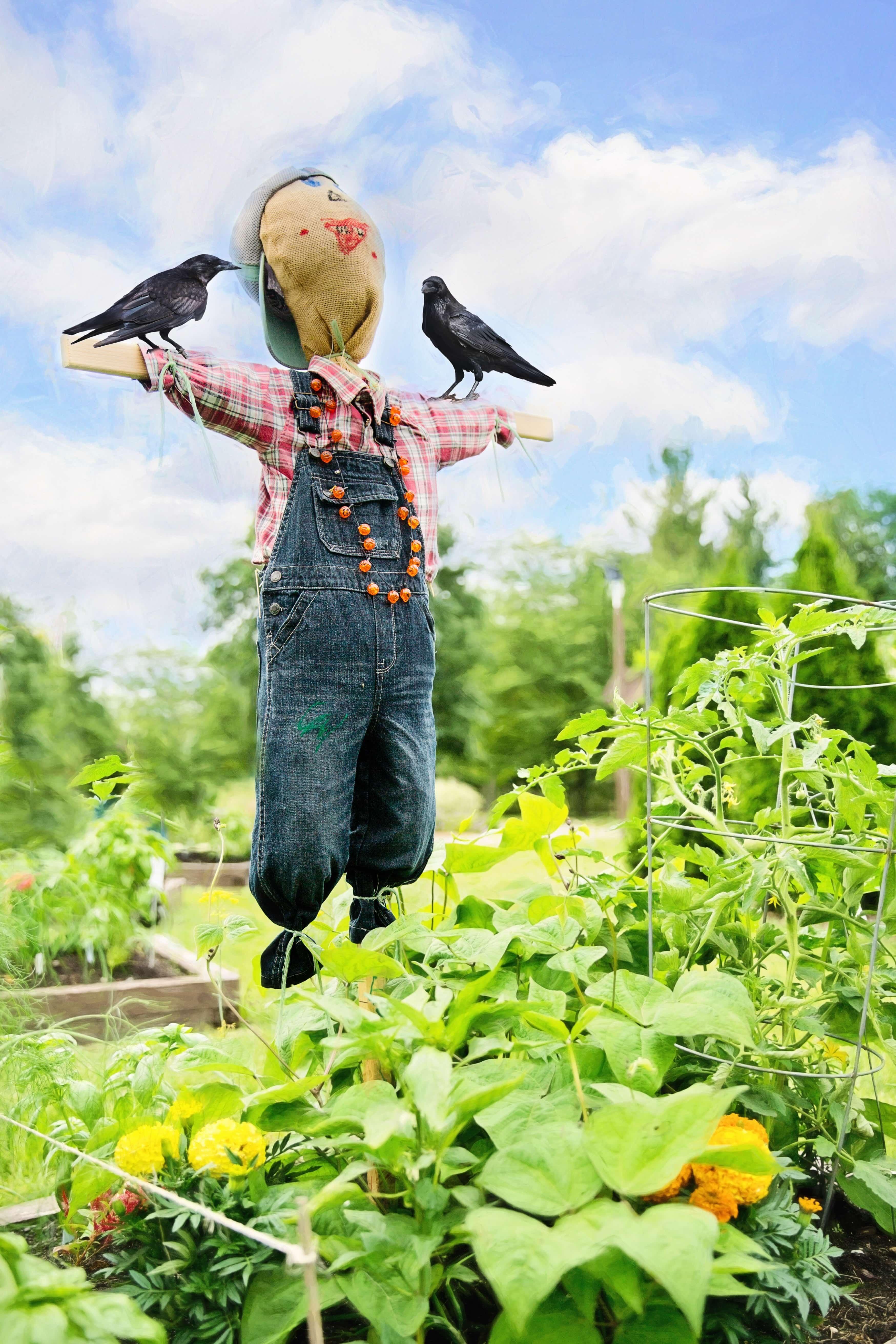 野菜畑とかかし