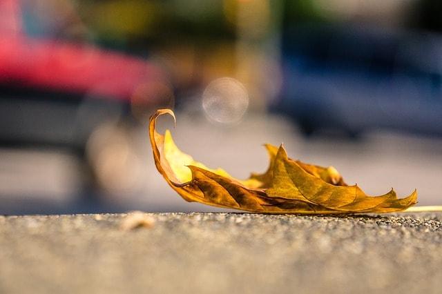 地面に棄てられた黄色い落ち葉