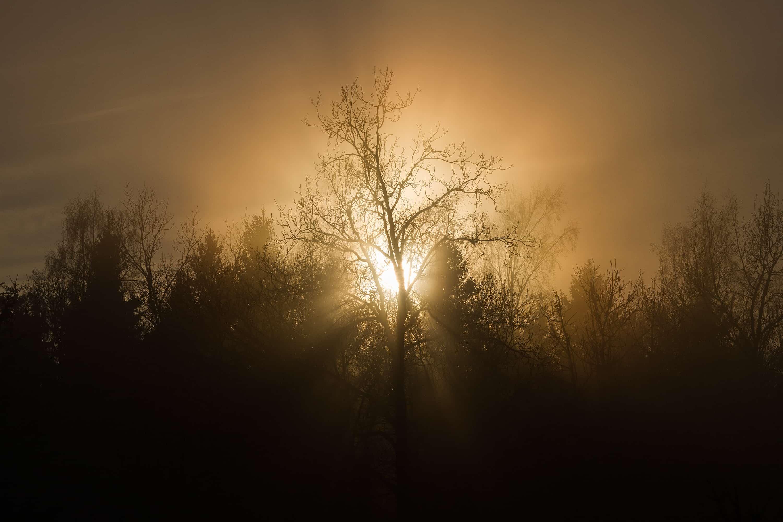 森に注ぐ美しい光