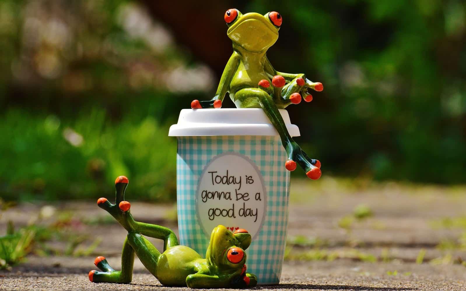 カップの周りにいる蛙