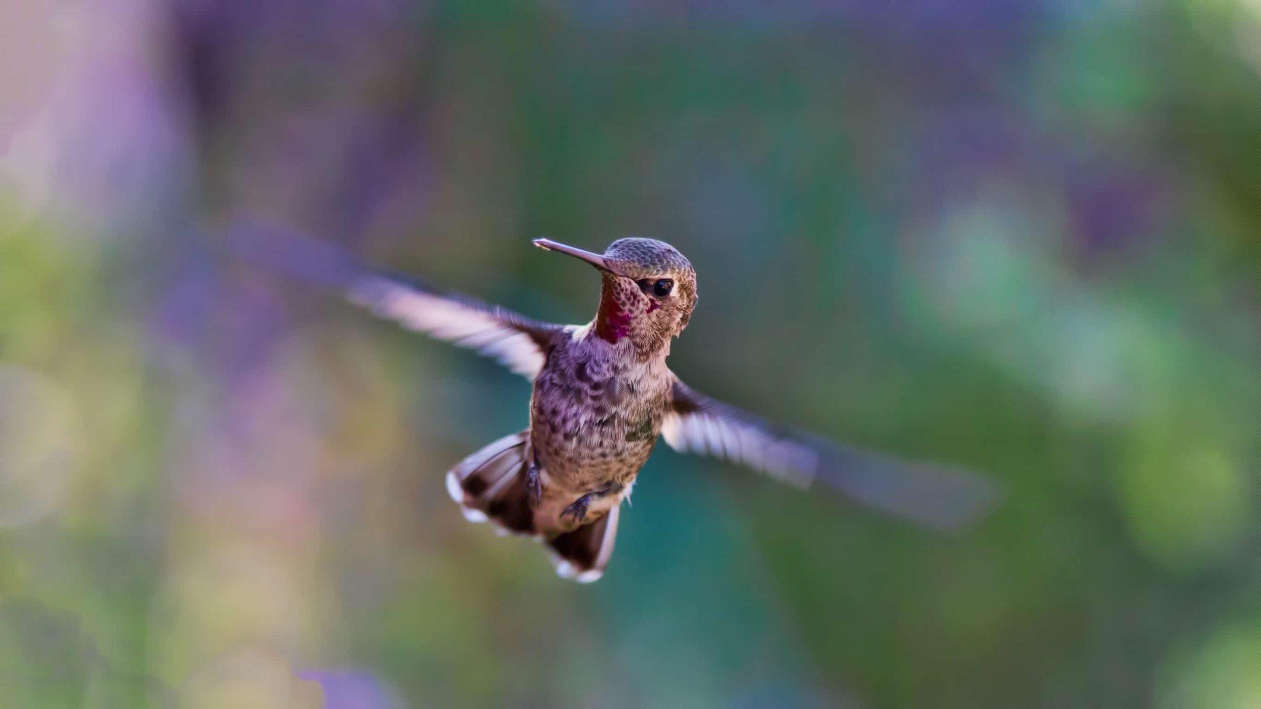 羽ばたいているハチドリ