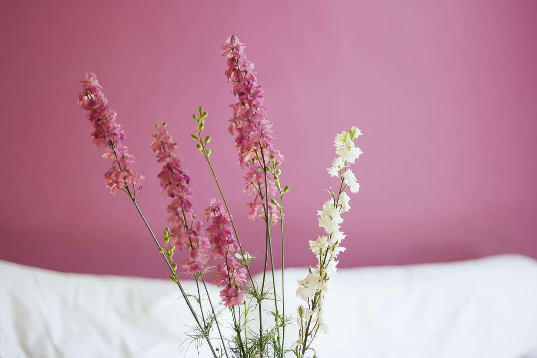 ピンクと白の花々