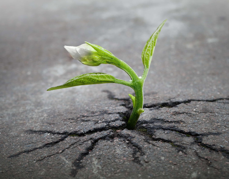 コンクリートを突き破る芽