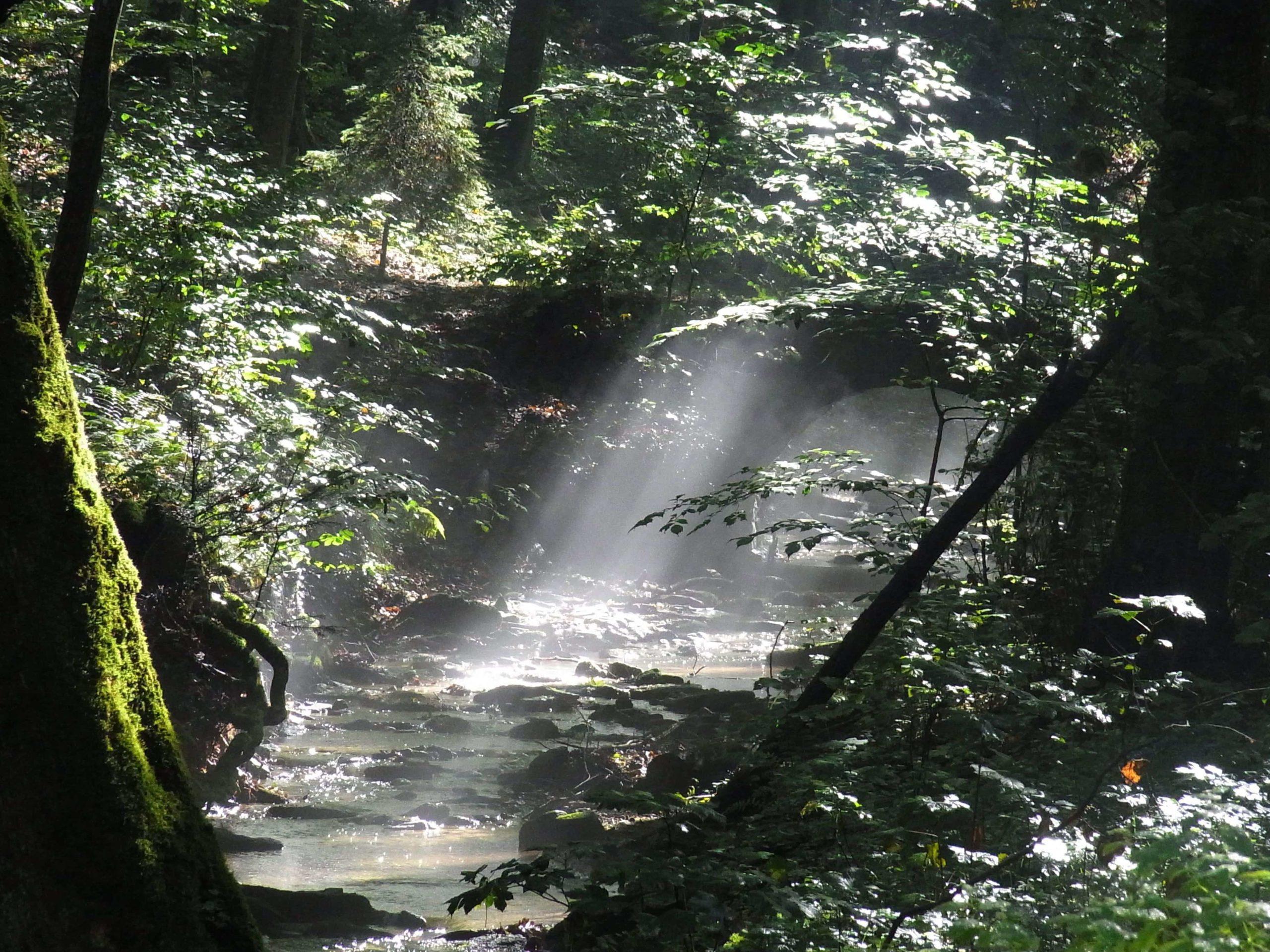 森に射し込む光