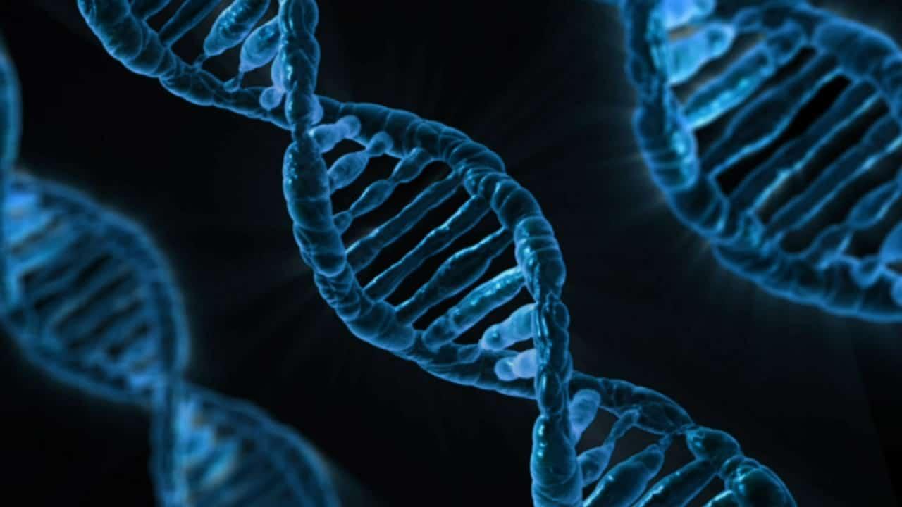 青く塗られた3基のDNA