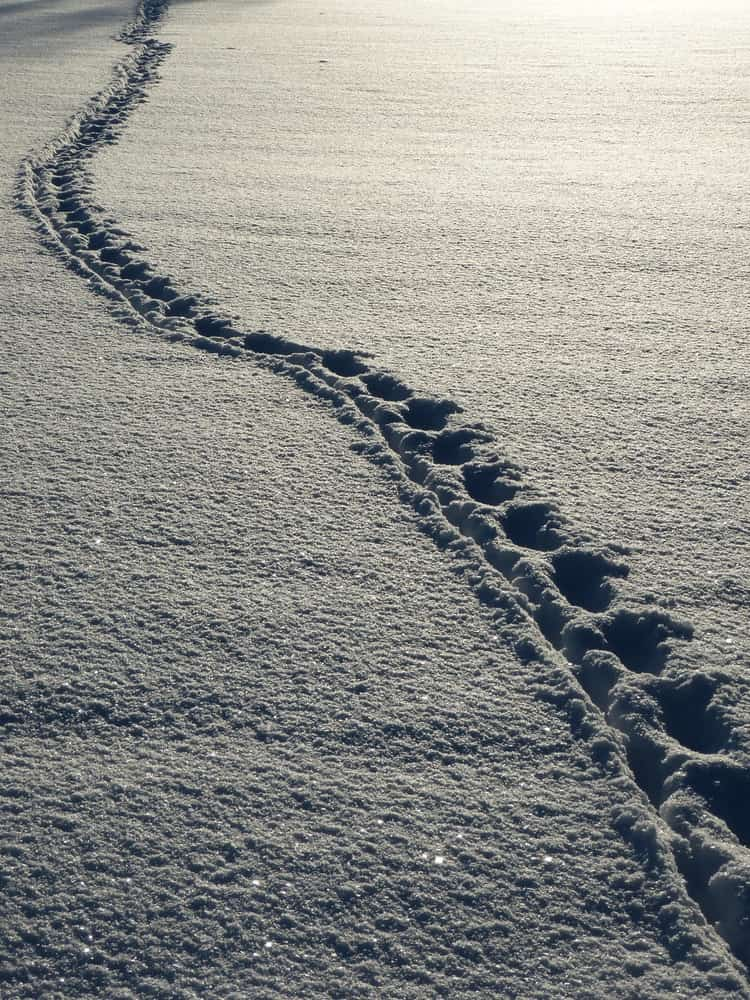 雪の上に残った痕跡