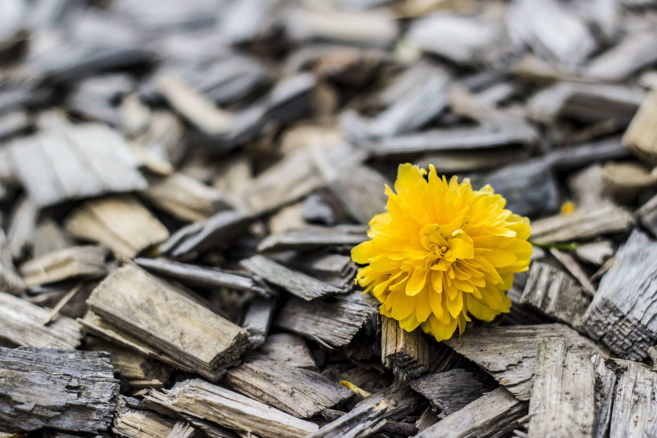 可燃物のなかの黄色い花