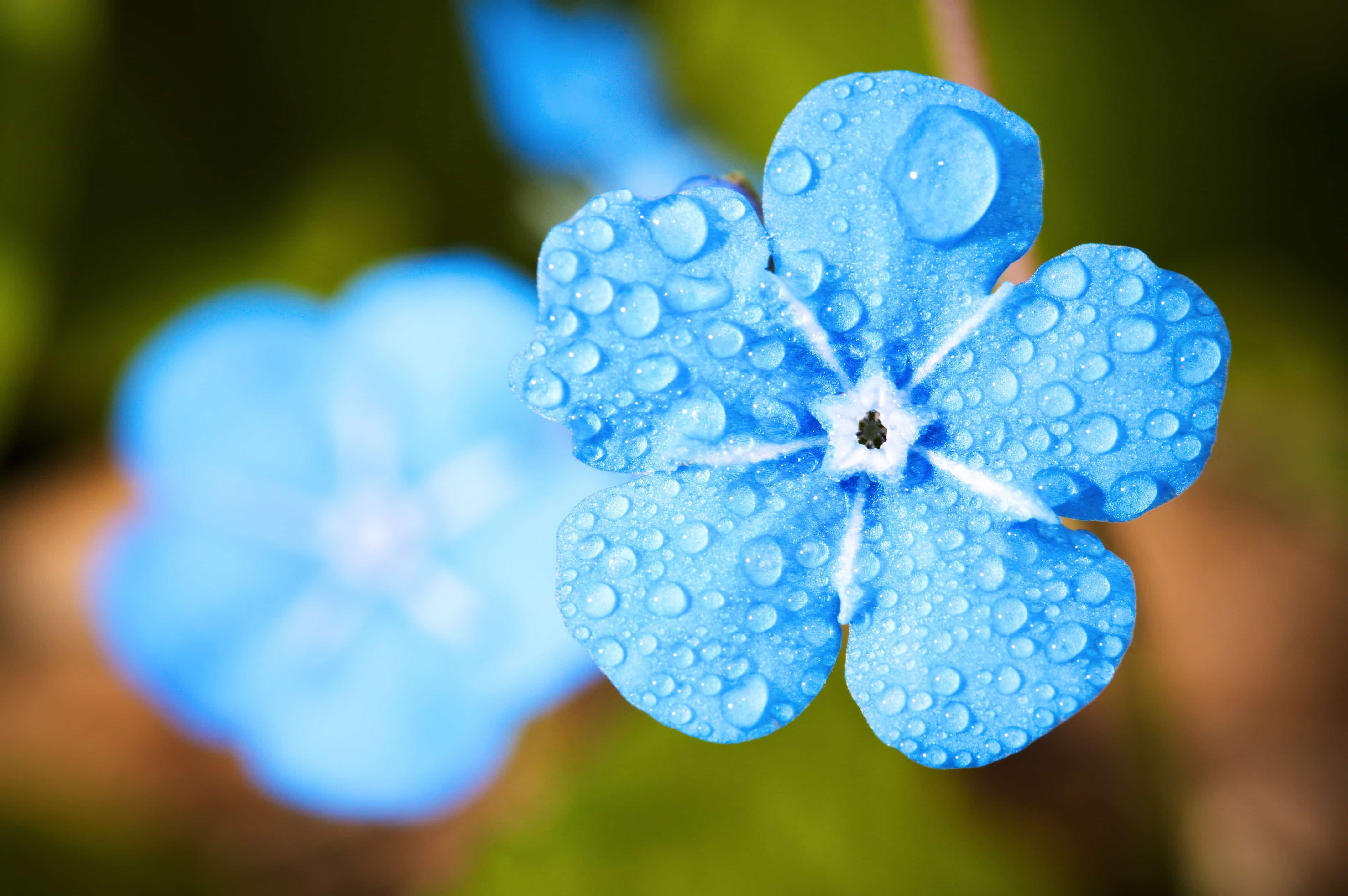 きれいな水色の花