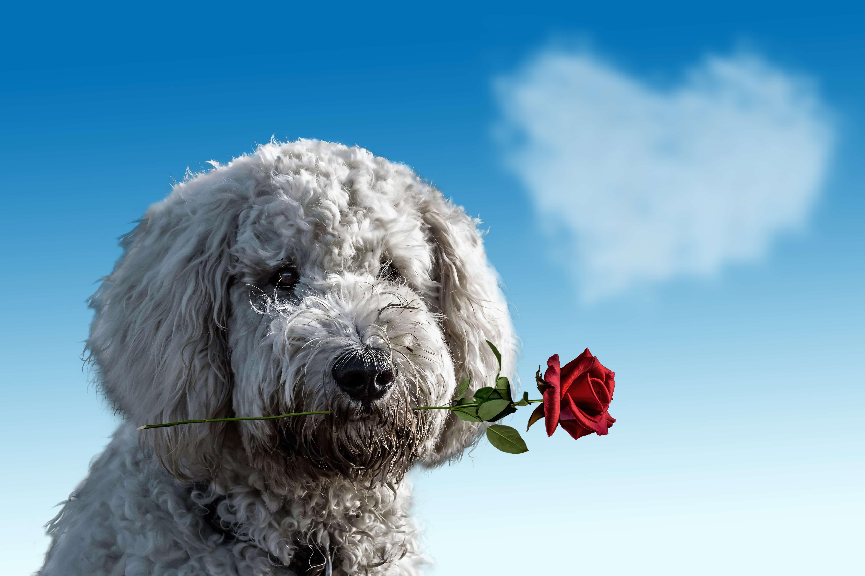 バラをくわえている犬