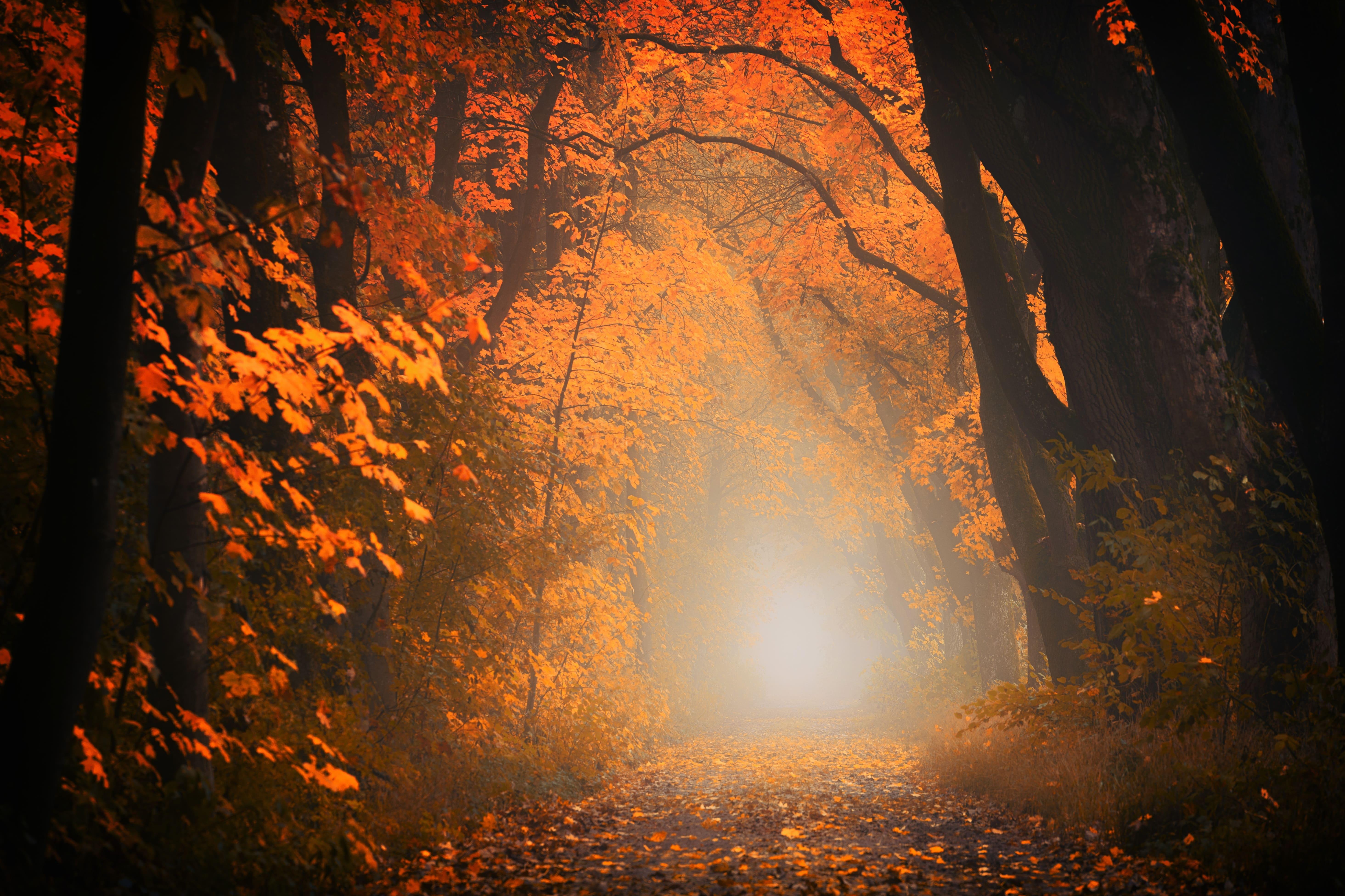 光に照らされた秋の道