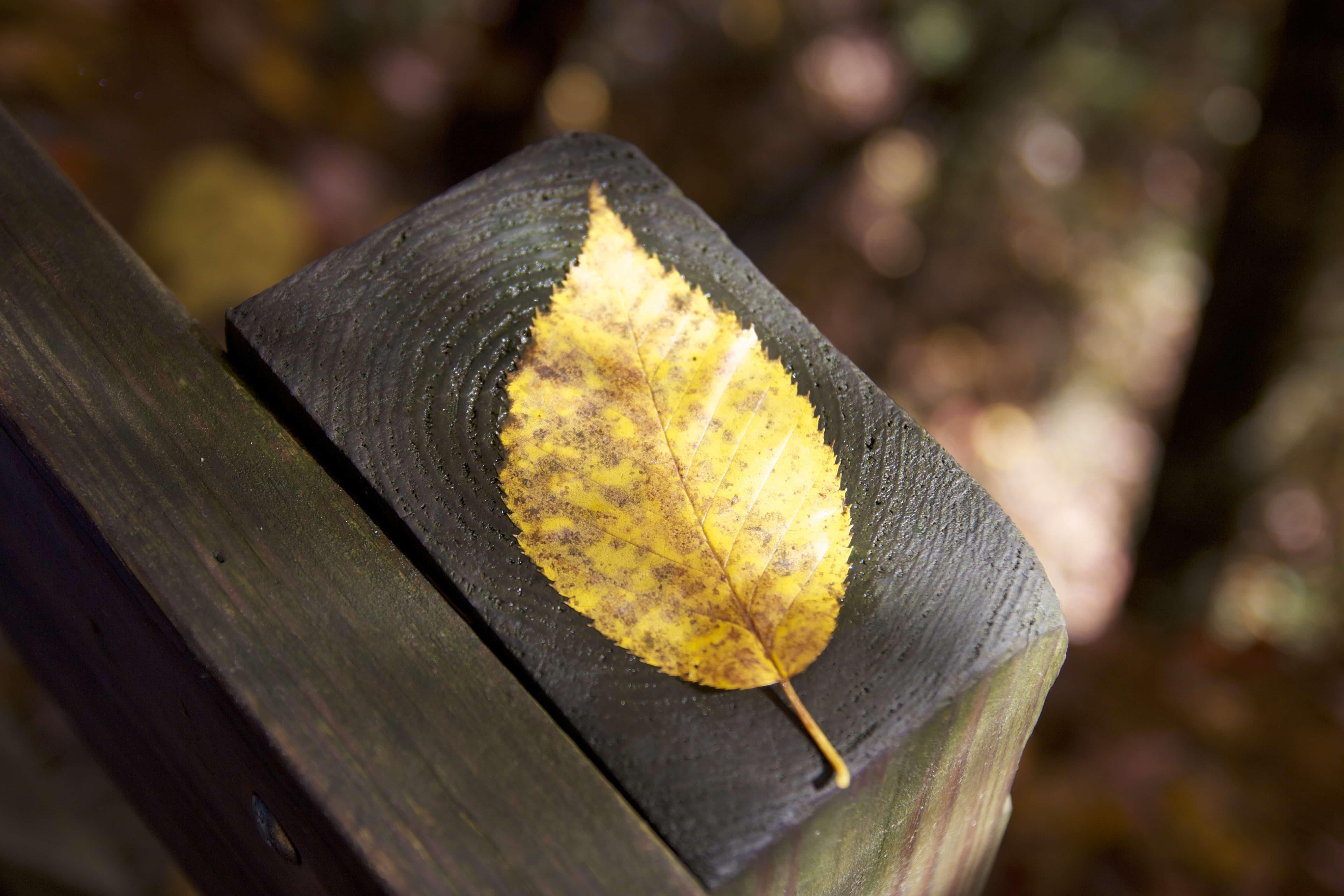 汚れた黄色い落ち葉