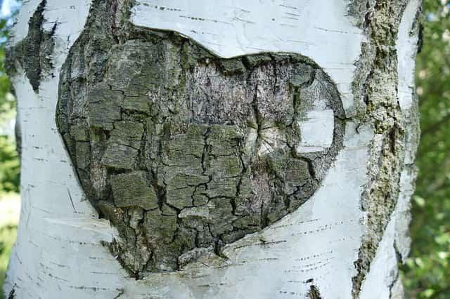 樺の上の傷ついたハート
