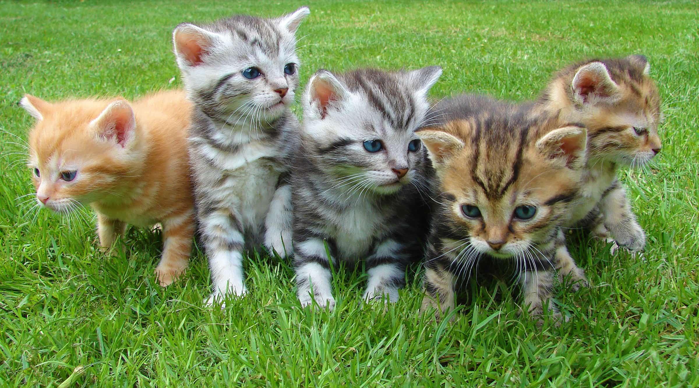 芝生で好きなほうを向く猫たち
