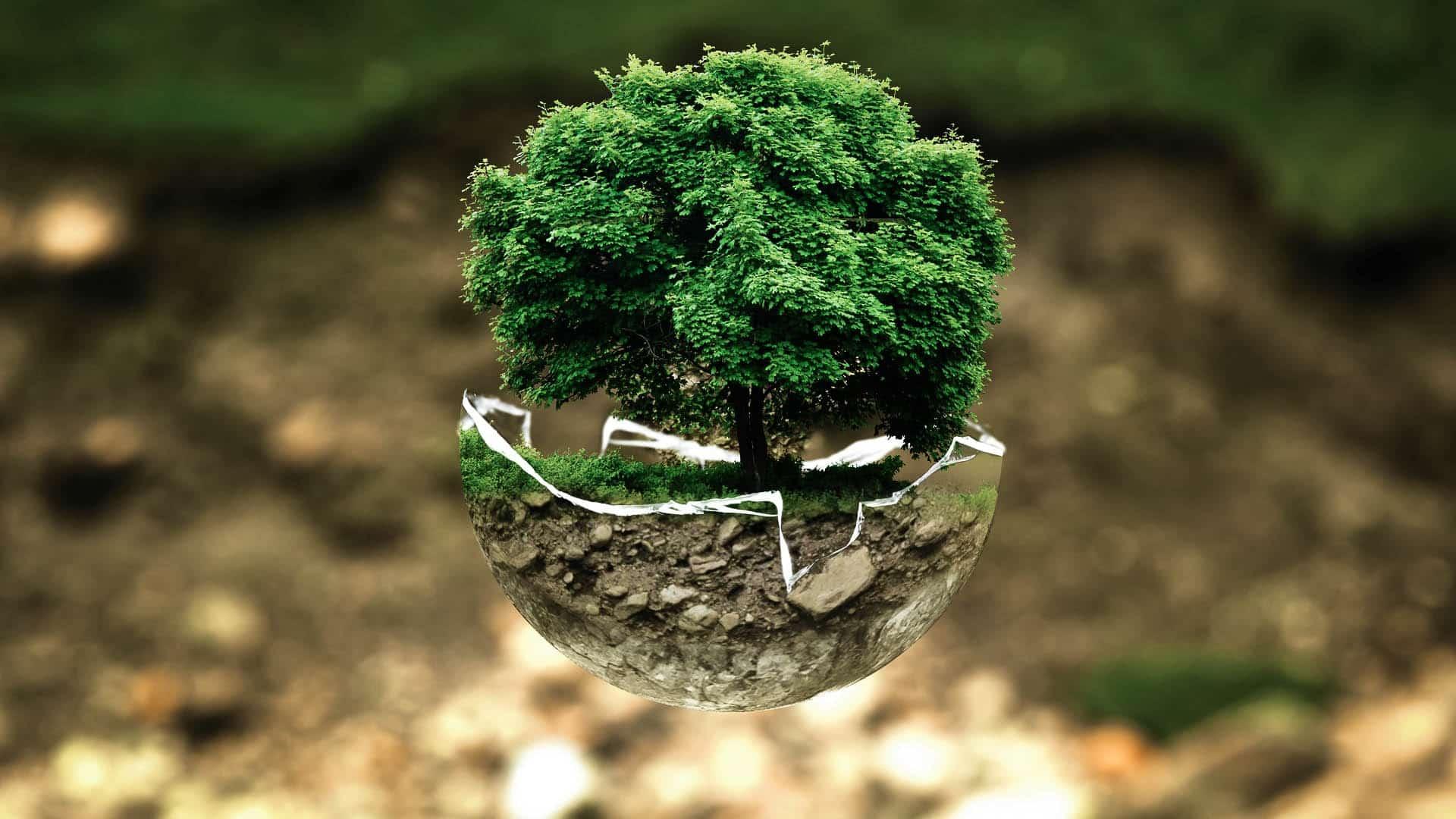 ちいさな木のお世話