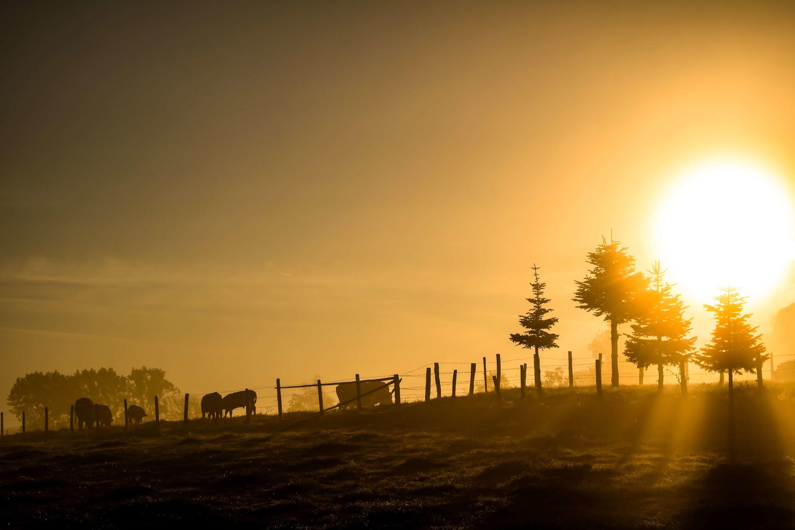 日の出の馬牧場