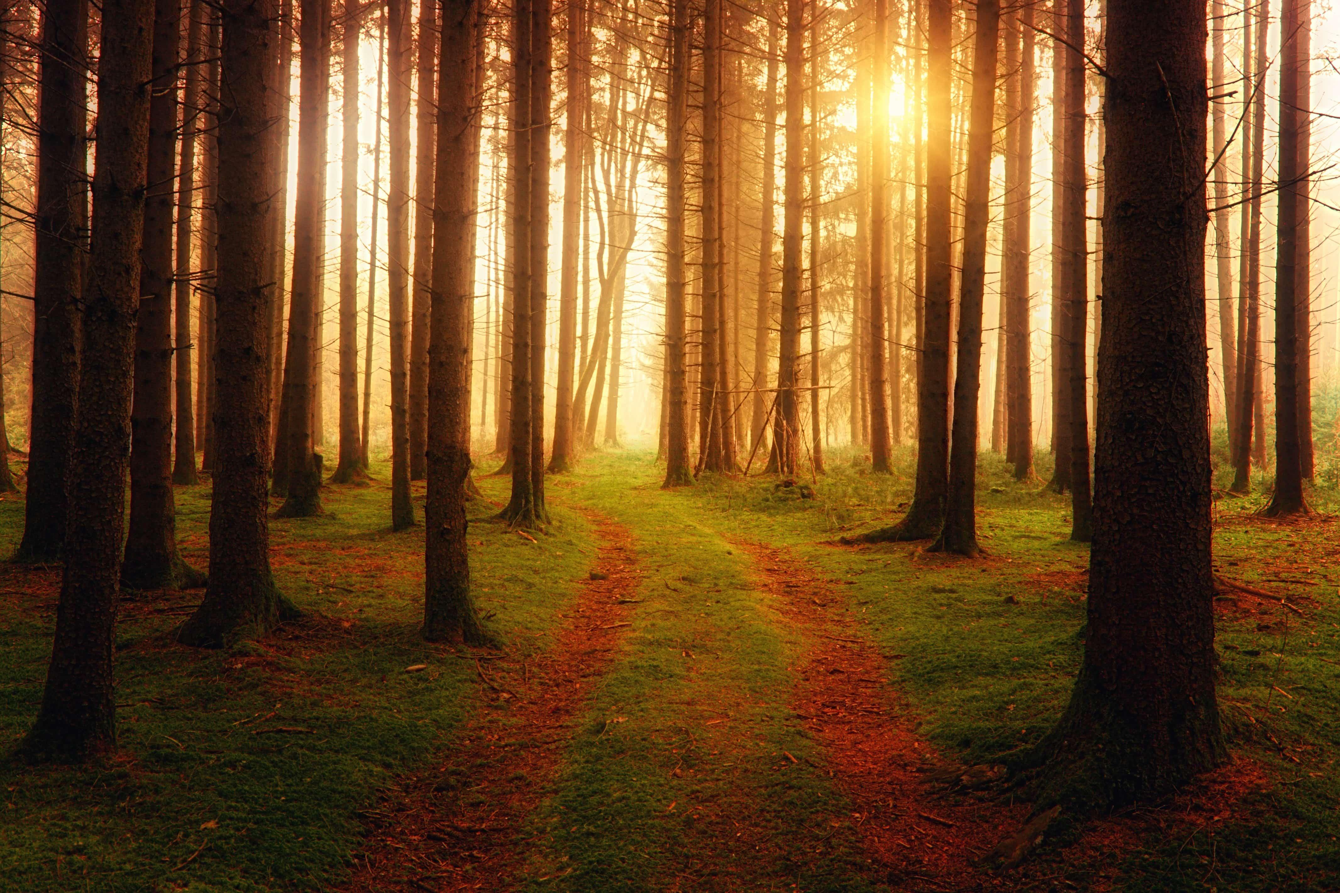 陽に照らされた森の木々