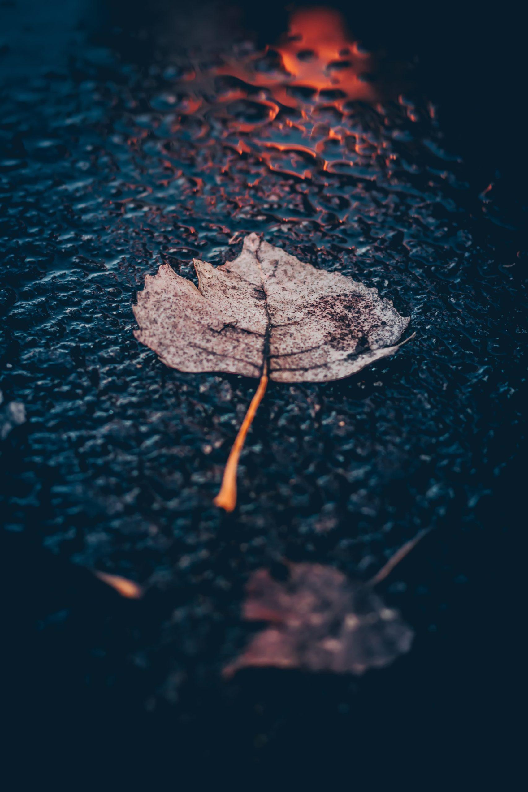 雨のアスファルトに落ちた葉